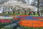 Button to see details and booking options for The Keukenhof Estate: Tulips Galore